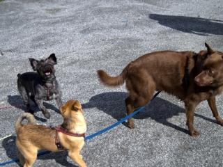 Ronja, Felix og Mikke
