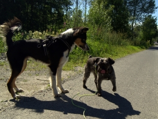 Back og Ronja